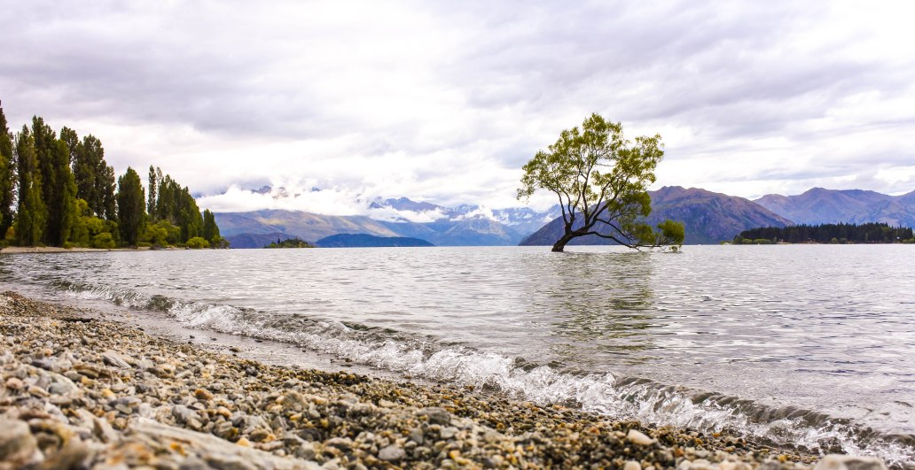 Lone Tree of Lake Wanaka 2.jpg