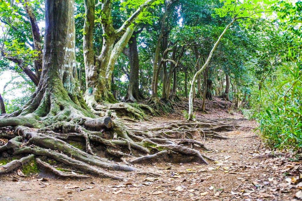 Kamakura Hiking - Western Hills