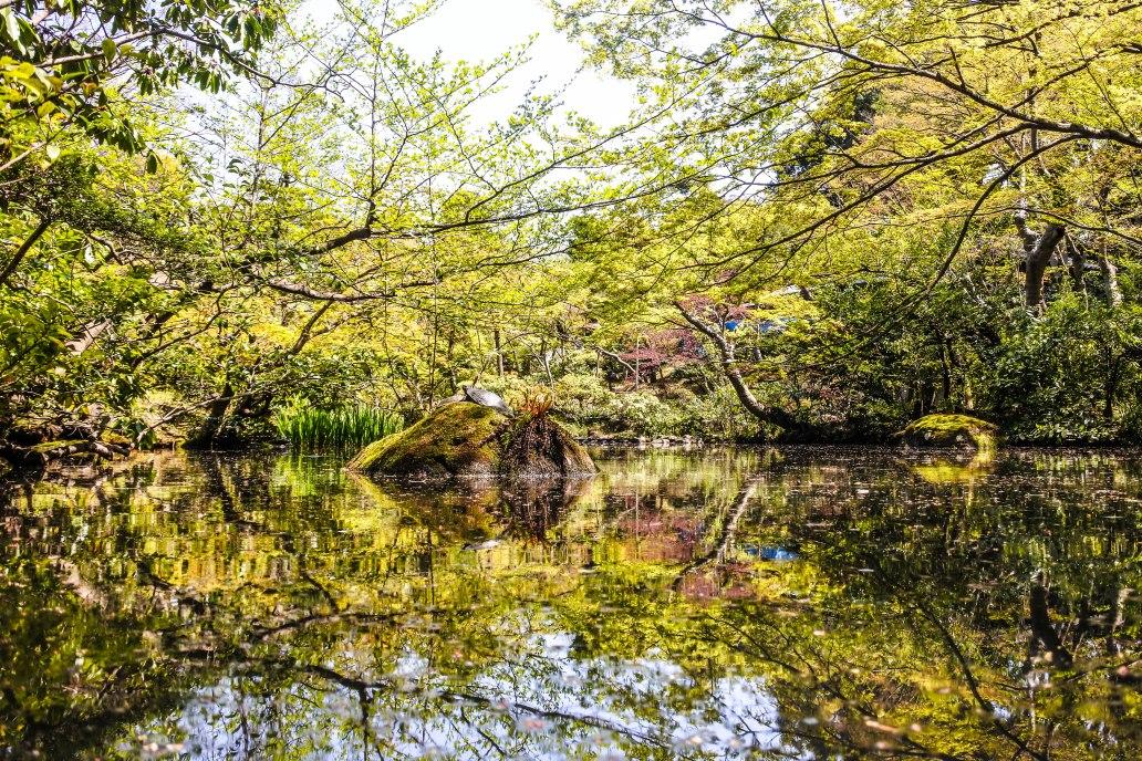 Reflections at Nezu Museum Garden.jpg