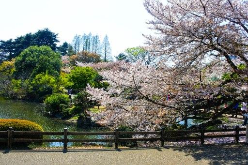 Spring at Shinjuku Gyoen National Garden